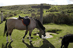 Horse Riding nr Pickering
